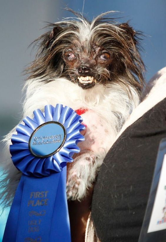 Peanut, the winner in the world's ugly dog contest for 2014.