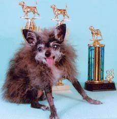 Nana, the winner in the world's ugly dog contest for 2000, 2001
