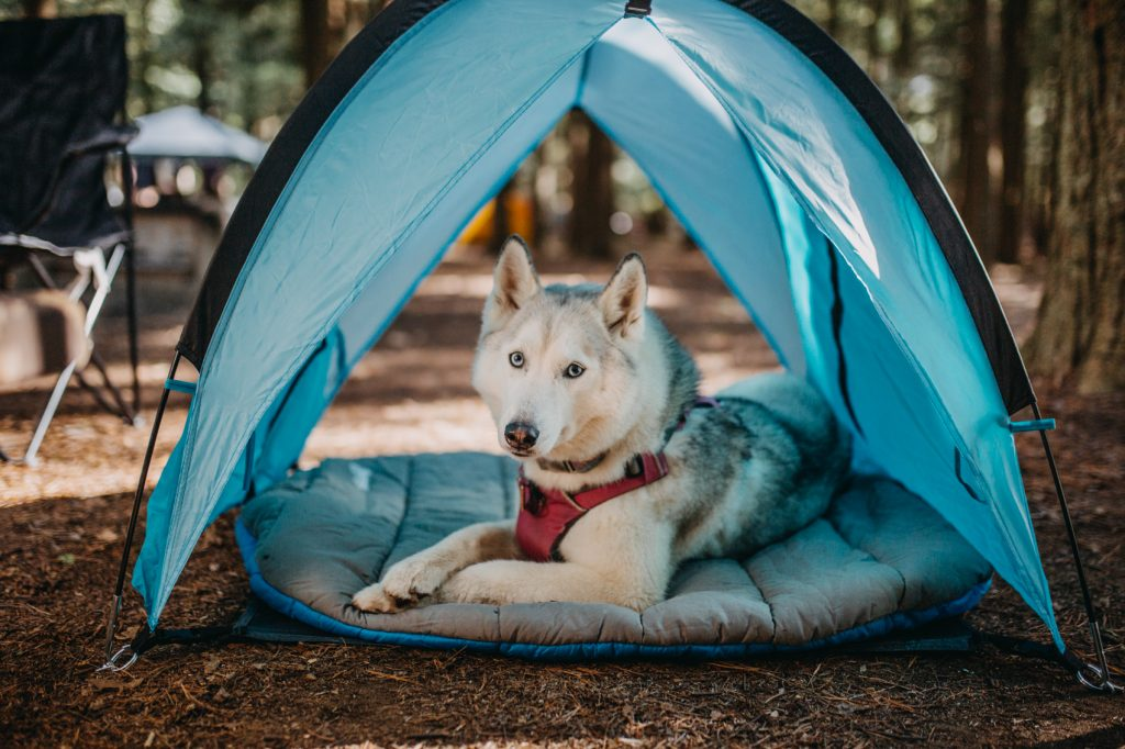 dog under a tent. How to Cool Down Your Dog
