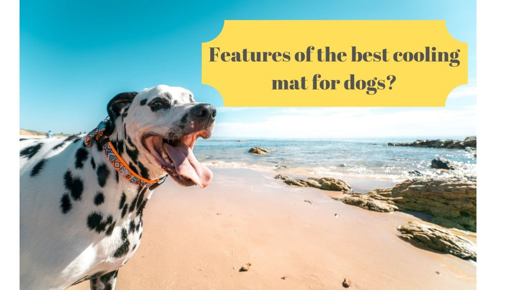 Features Of The Best Cooling Mat For Dogs Glamorous Dogs