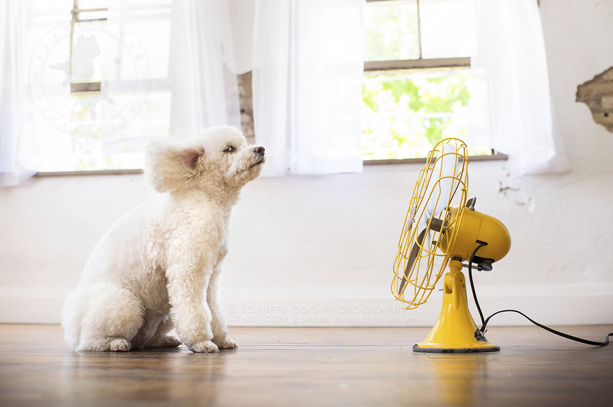 dog in front of a fan. How to Cool Down Your Dog
