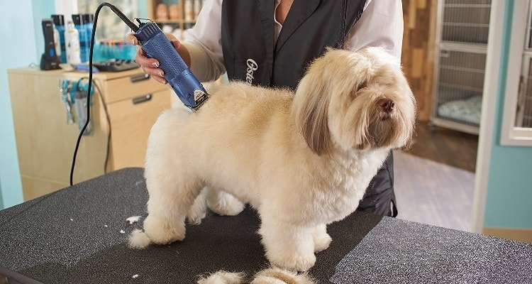 Can You Cut Dog Hair with Human Clippers