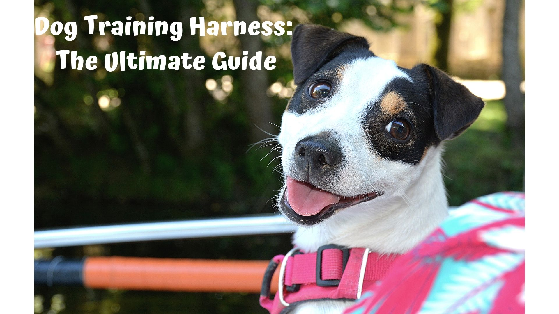 Dog Training Harness: Ultimate Guide