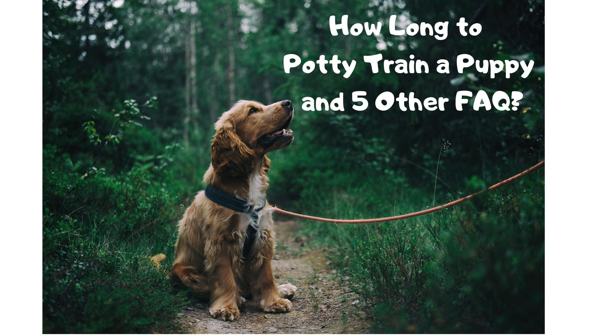 How Long to Potty Train a Puppy