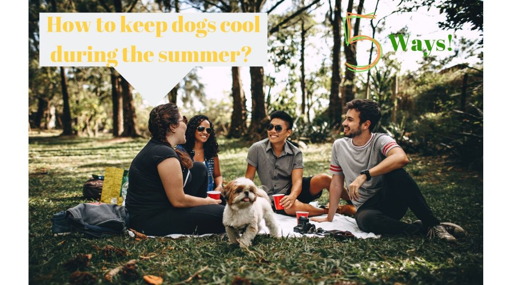 How to keep dogs cool during the summer (5 ways)