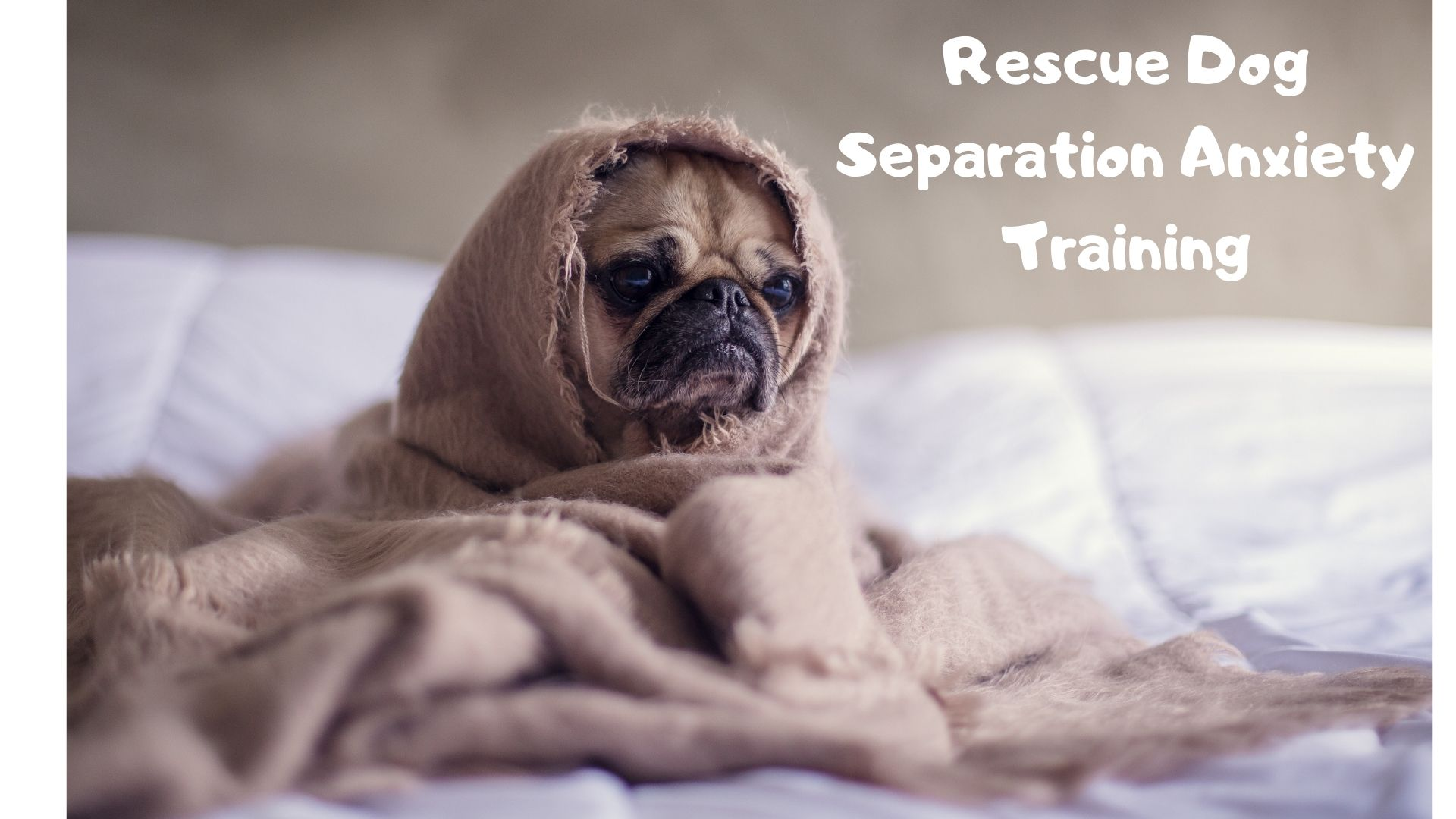 Rescue Dog Separation Anxiety Training