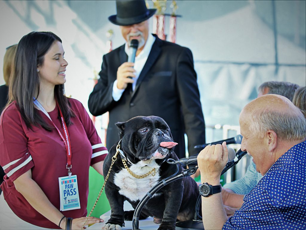 The Ugliest Dog Competition