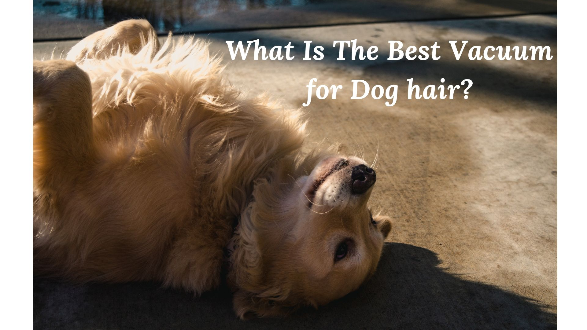 What Is The Best Vacuum for Dog hair?