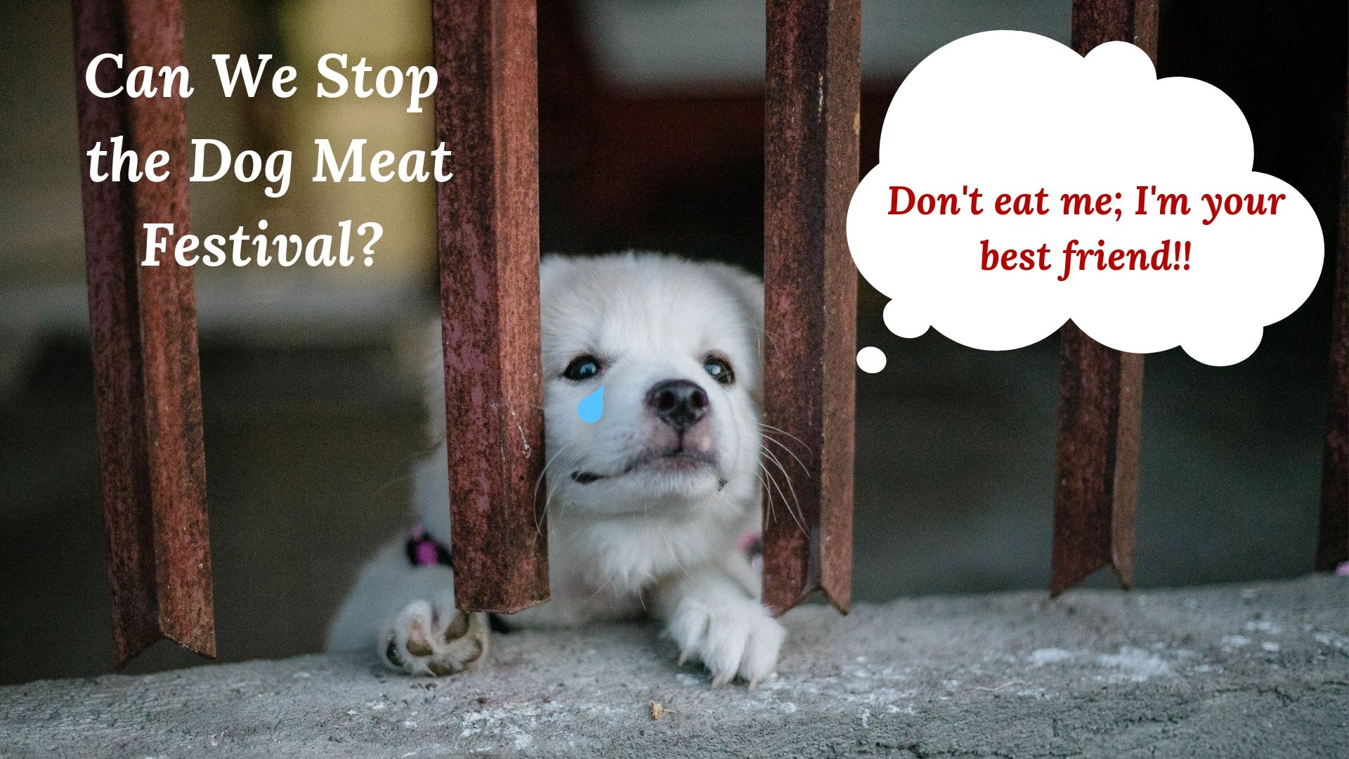 Can We Stop the Dog Meat Festival?