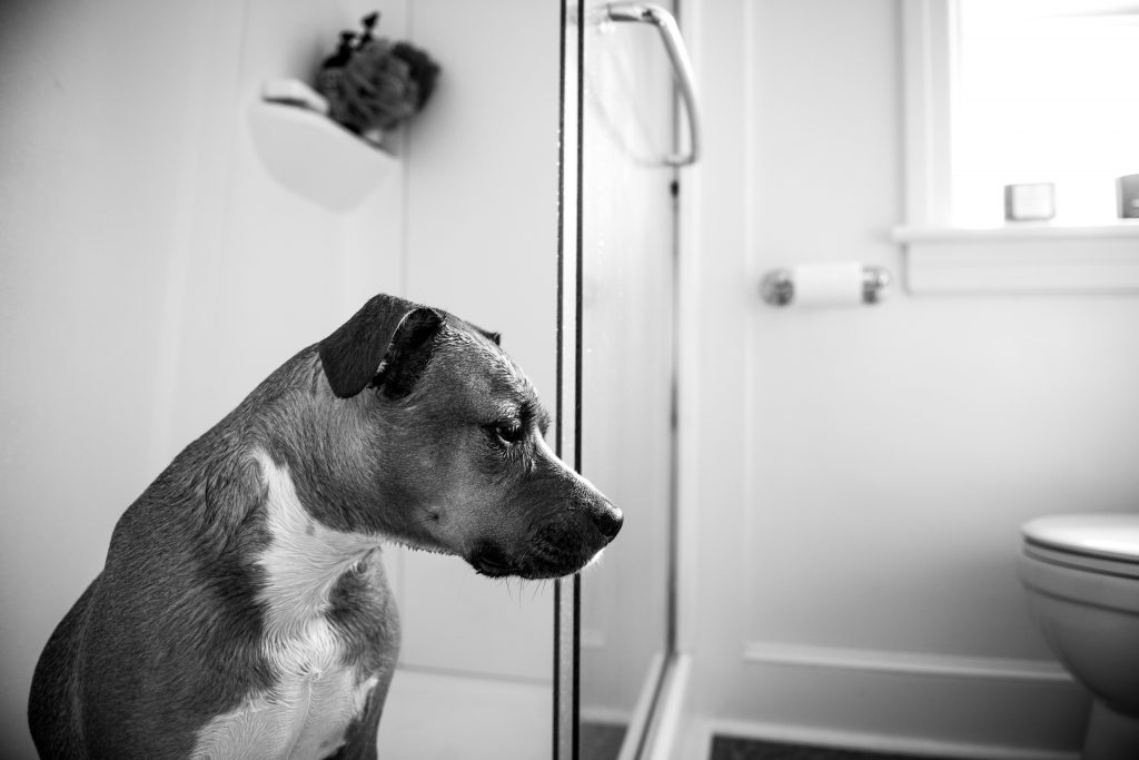 how long to potty train a puppy - A dog in a bathroom