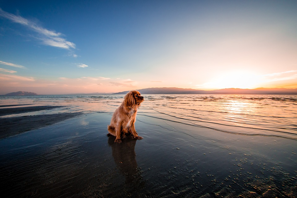 dog in front of the ocean. how to cool down your dog