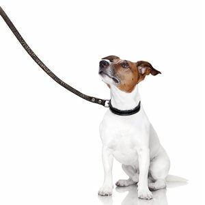 Which material use to walk on a leash?