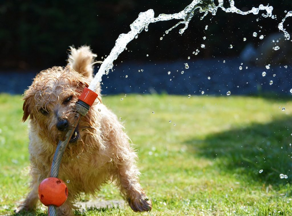 How to Keep Dogs Cool in Summer? The answer is water