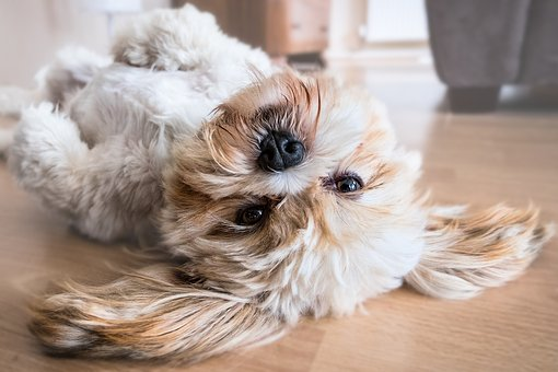 how to stop dog hair shedding cute dog