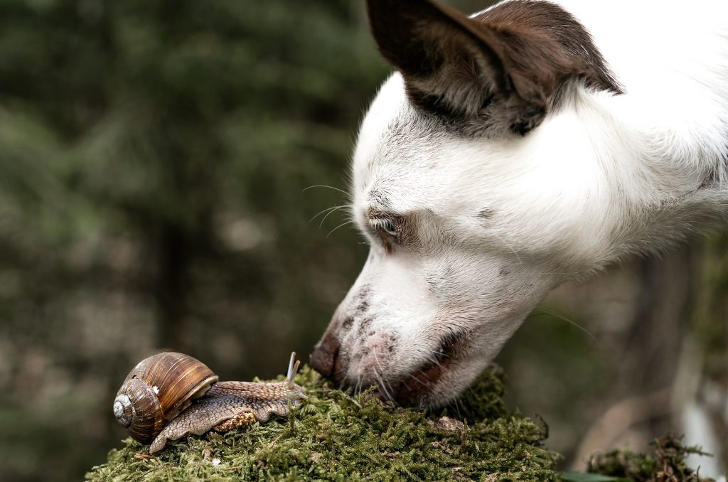 a dog sniffing a snail- scent training for dogs