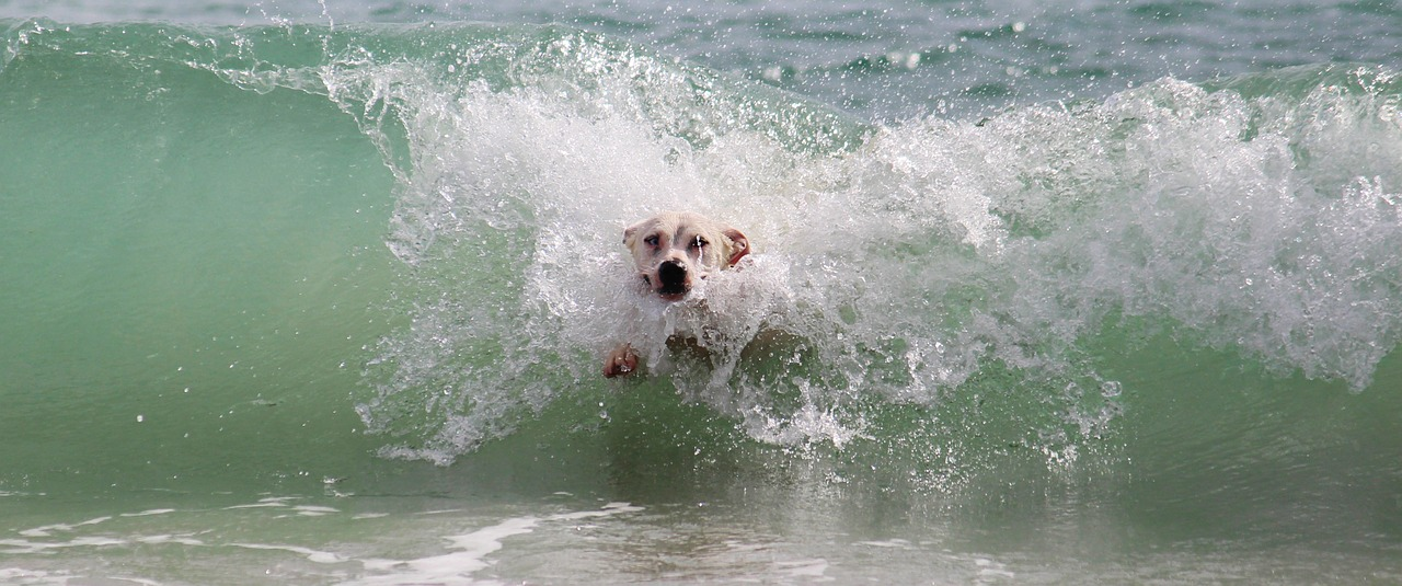 This is How to Keep Dogs Cool in Summer