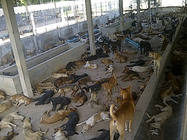 dogs in storage for the Chinese dog eating festival