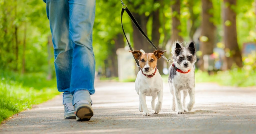 When to start leash training a puppy?
