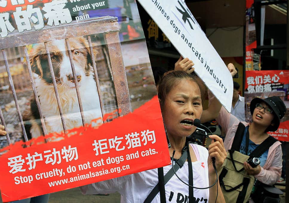protests against the Chinese dog eating festival