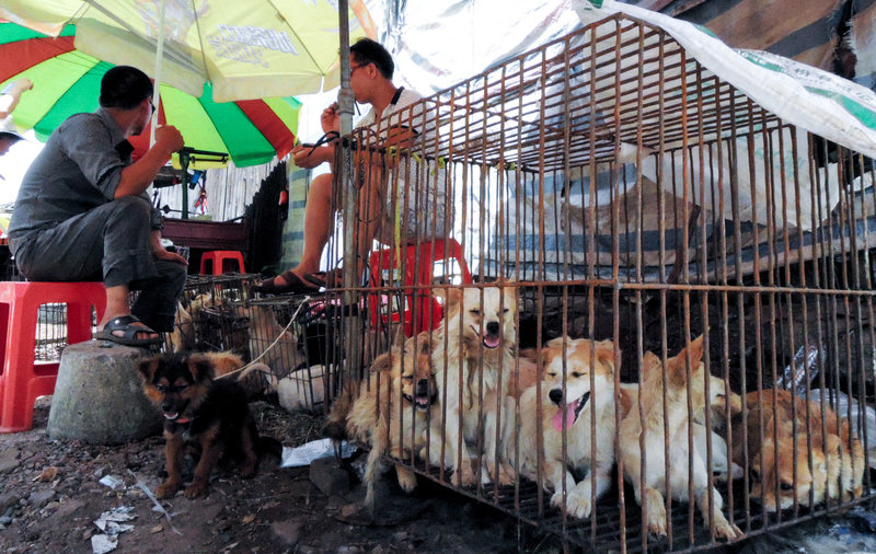the Chinese dog eating festival
