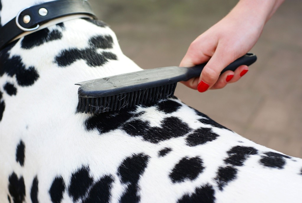 how to cut matted dog hair