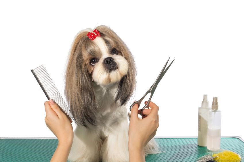 how to cut my dog's hair