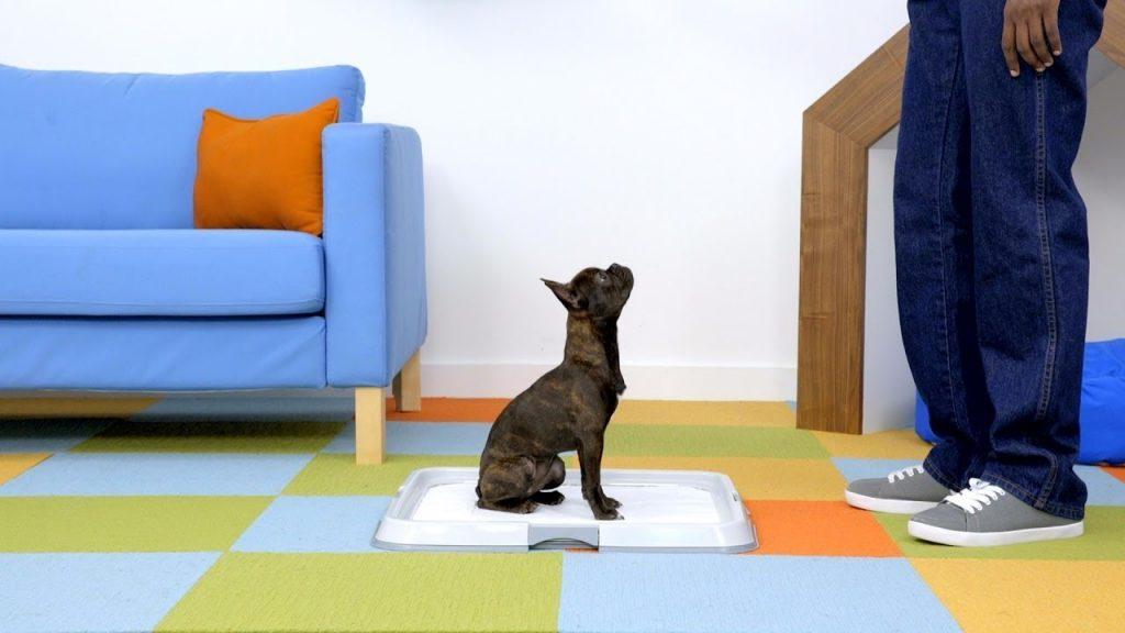 The best way to potty train a dog