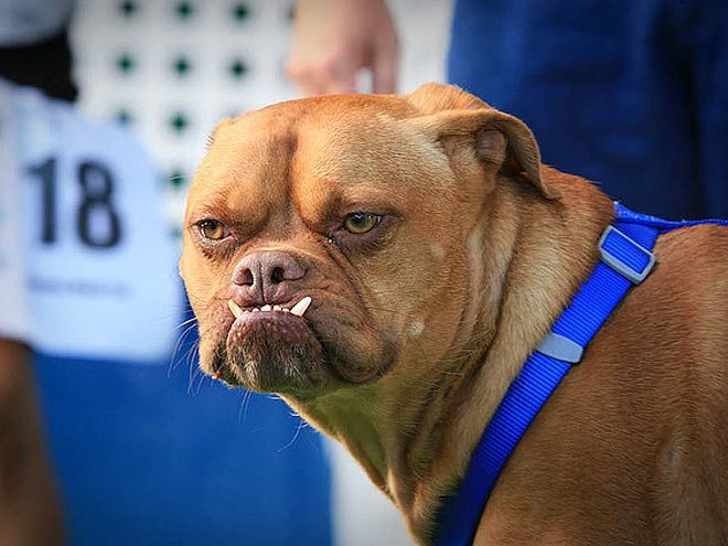 The World's Ugliest Dog Competition Is Coming, Is Your Pup Up for It?  
