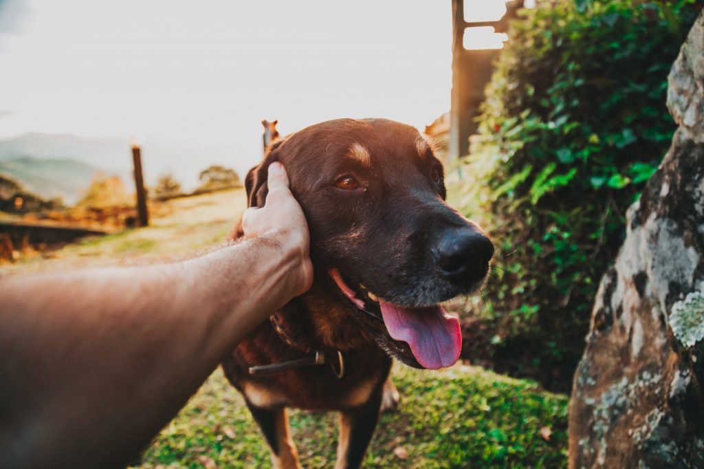 6 Ways to Calm a Dog Scared of Fireworks |