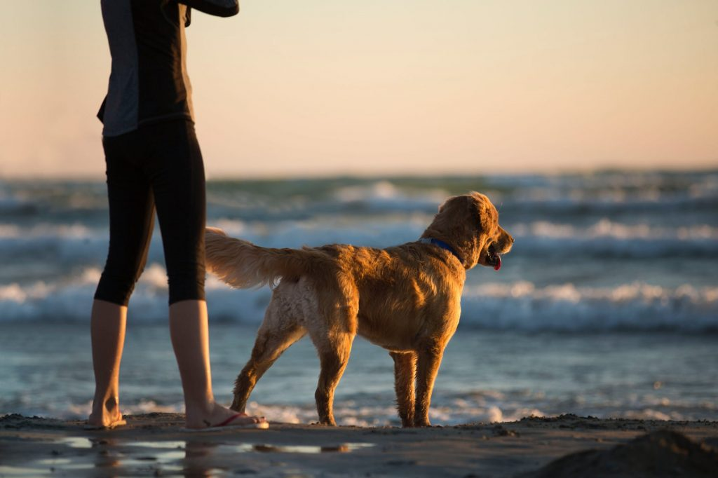 dog standing near the ocean. How to Cool Down Your Dog