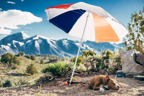 how to keep dogs cool outside shade umbrella dog