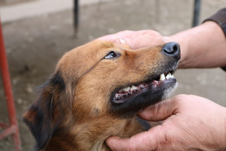Do Dogs Lose Their Teeth? Not a Simple Answer!! |
