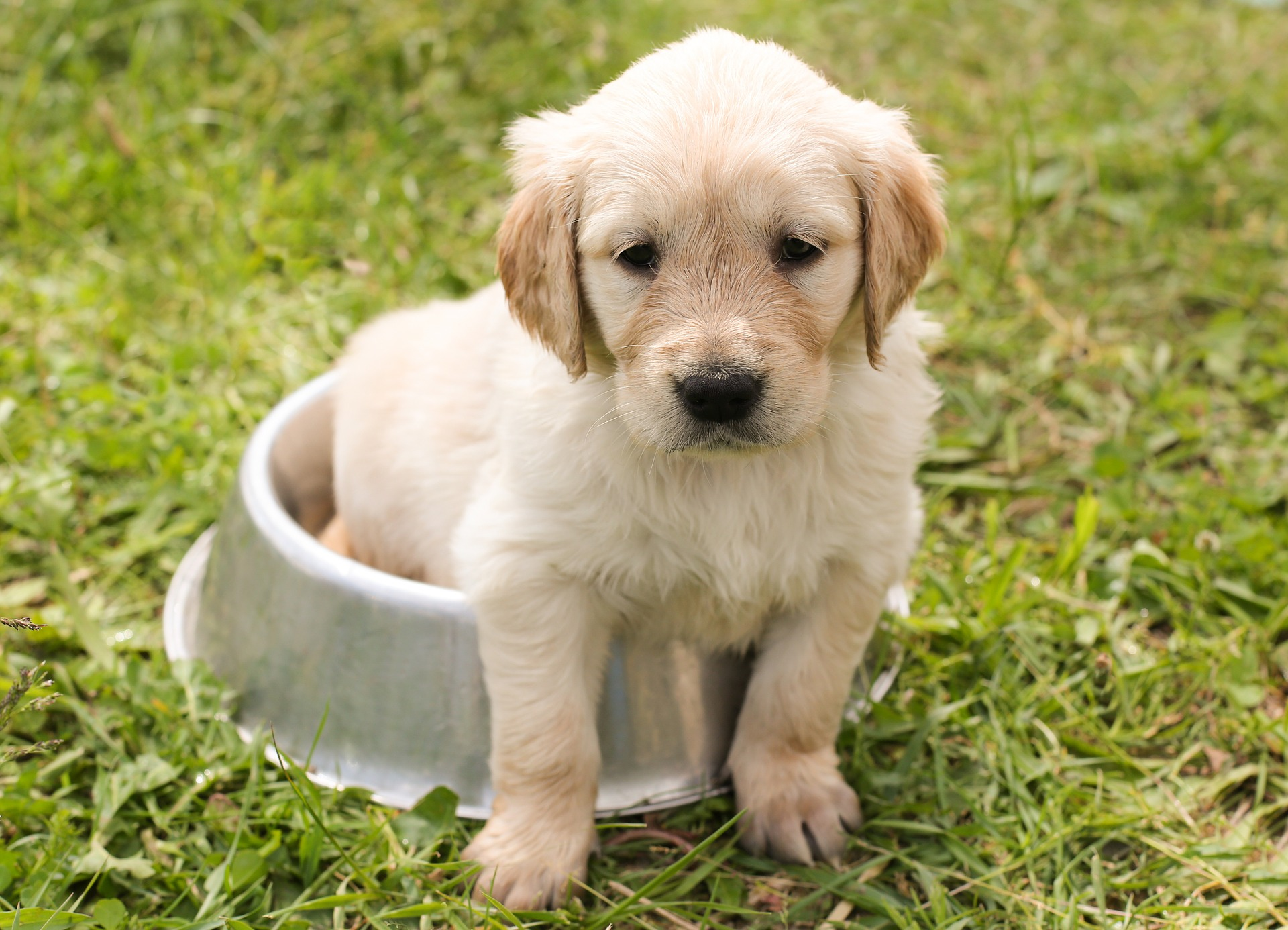 puppy sitting in a bowl-puppy potty training schedule