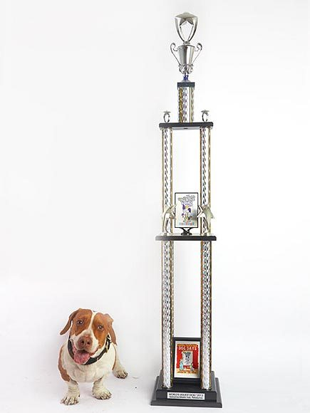 Wallee. The World's Ugliest Dog Competition