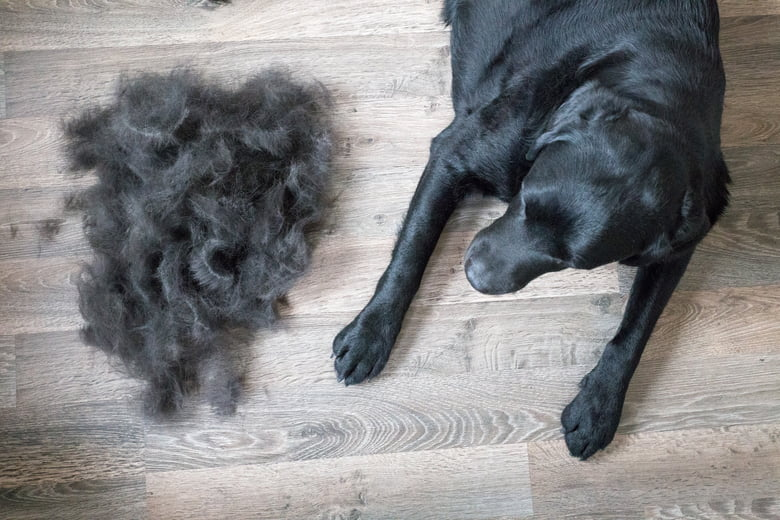 why do dogs lose hair