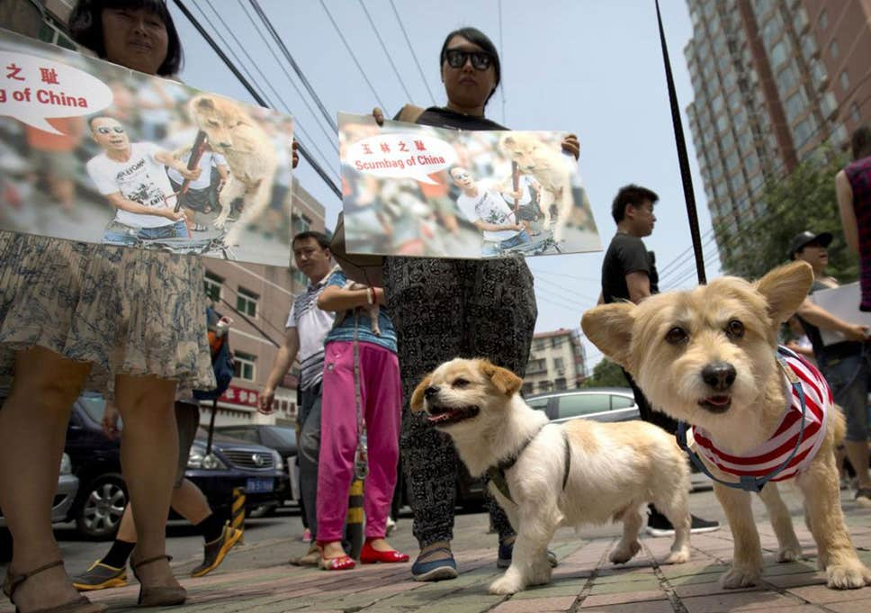 protesting the chinese dog meat festival