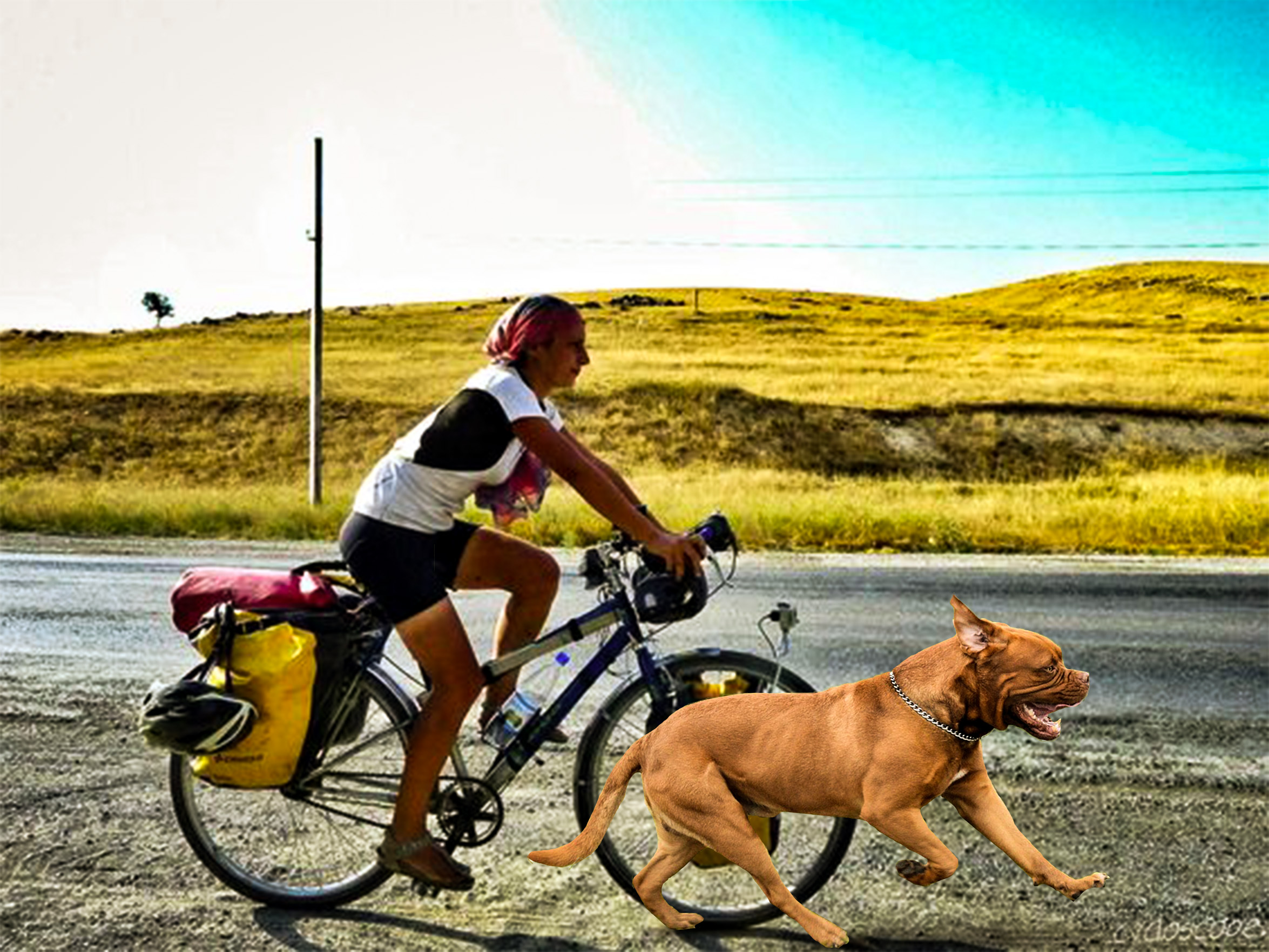 How to mountain bike with a dog