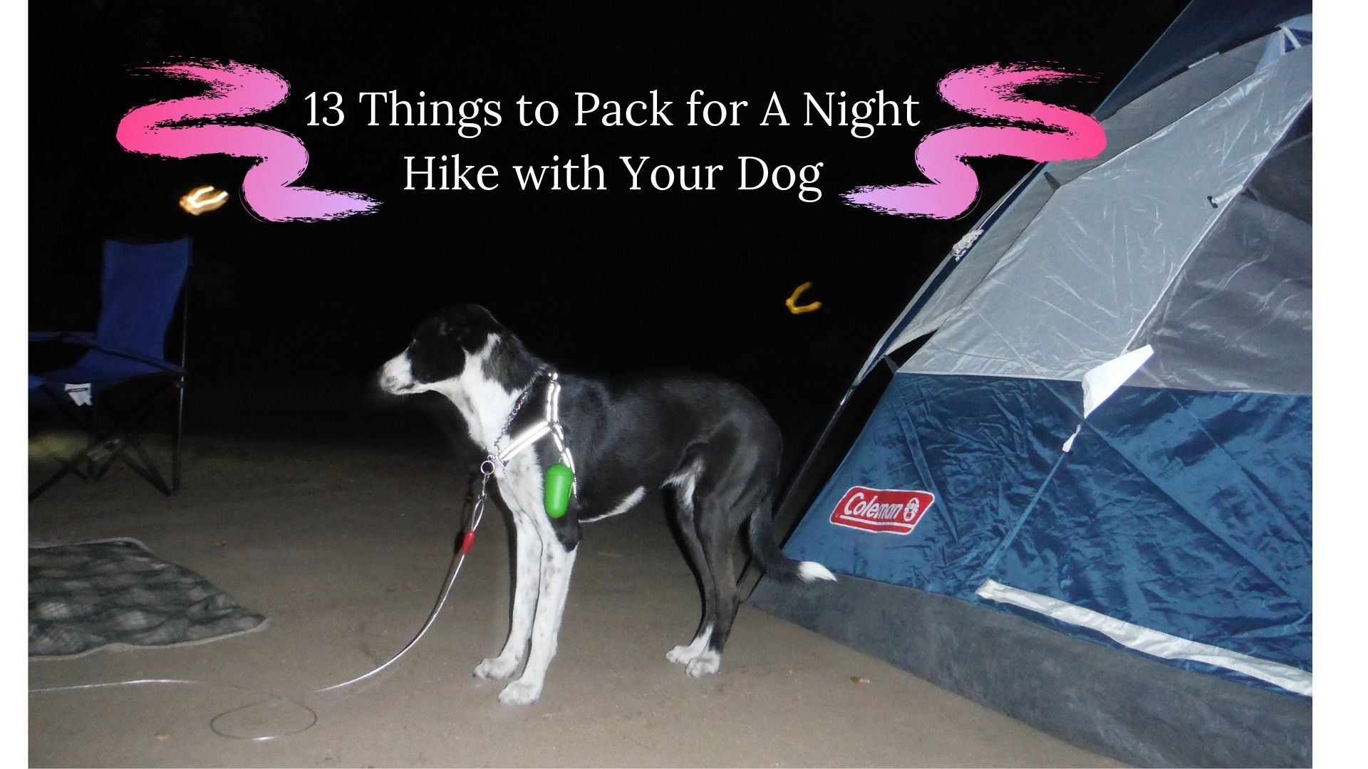 a night hike with your dog