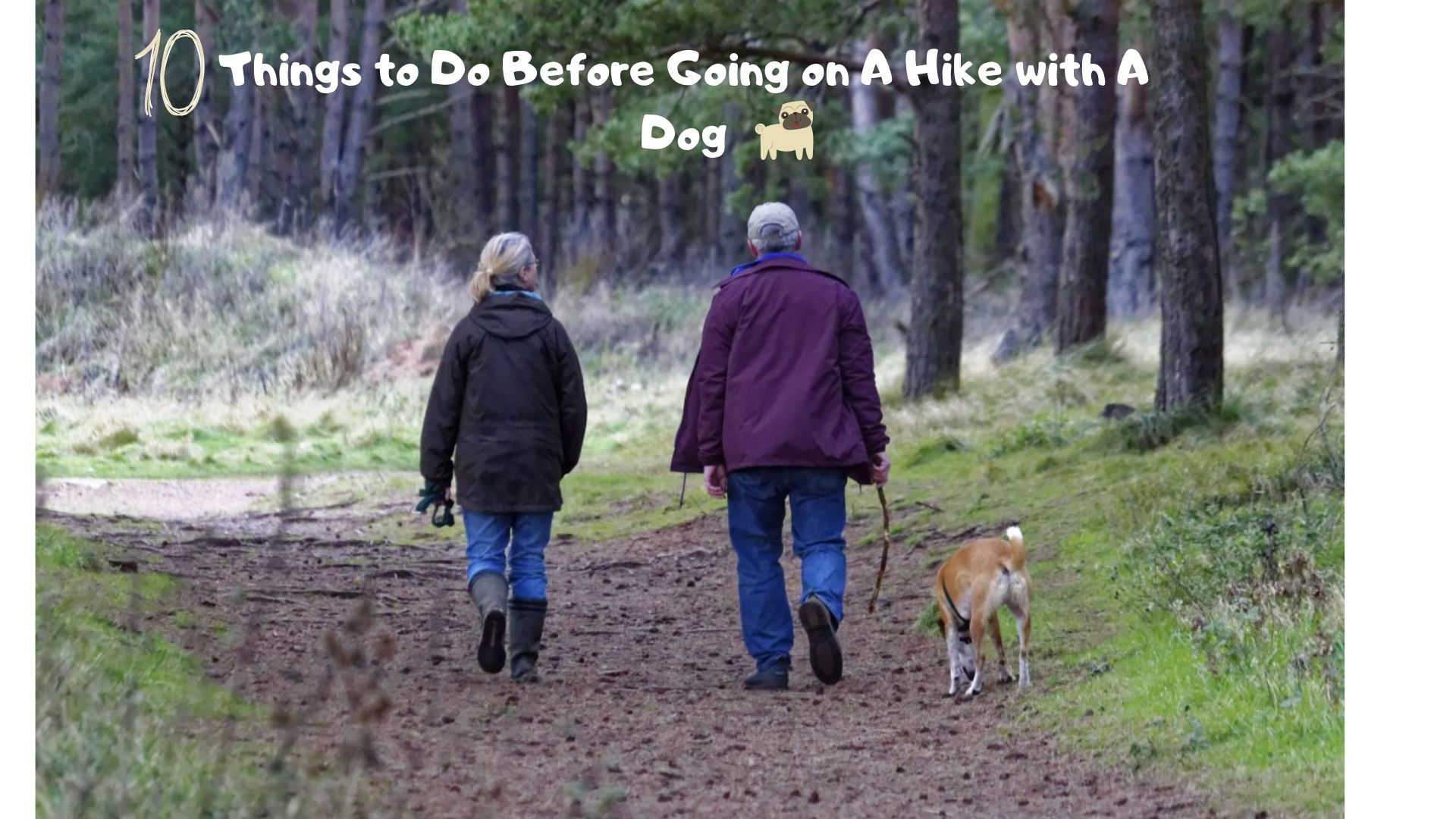 going on a hike with a dog