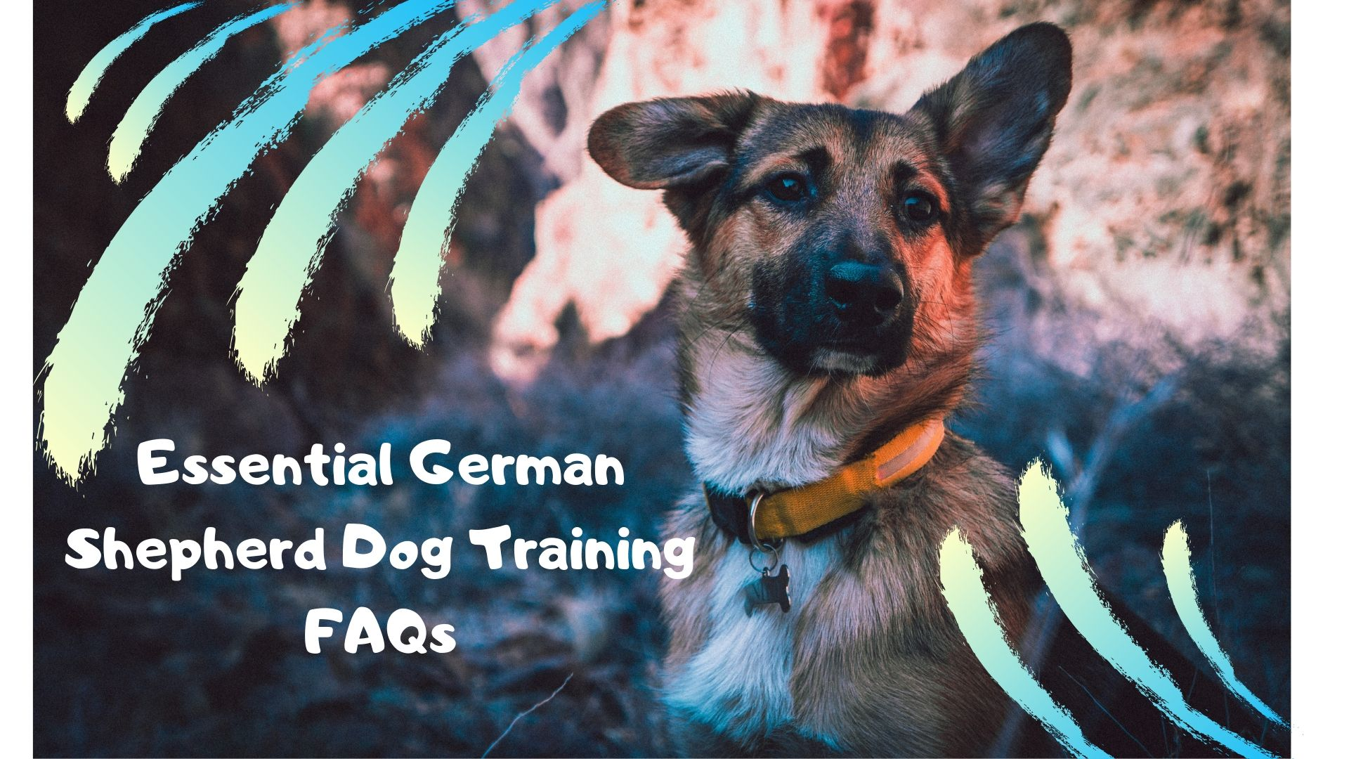 Essential German Shepherd Dog Training FAQs
