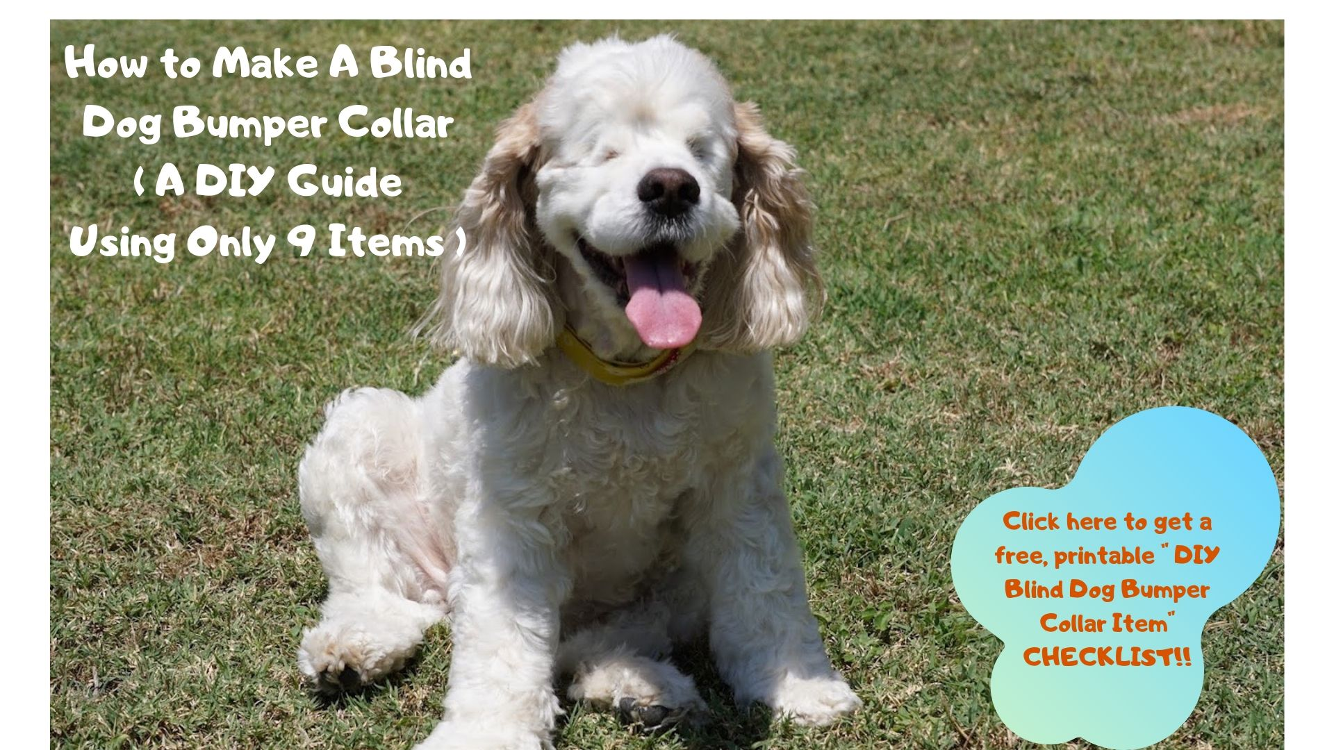 how to make a blind dog bumper collar