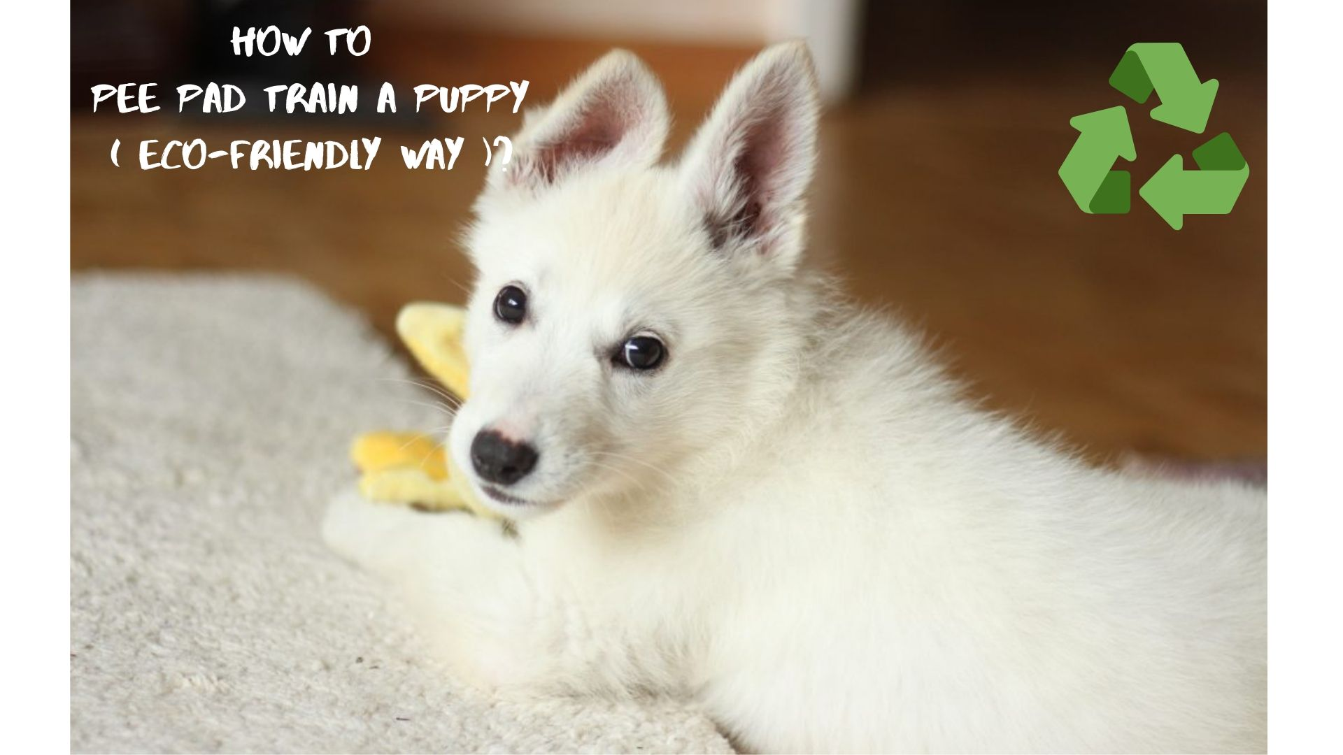 How to Pee Pad Train A Puppy ( Eco-Friendly Way )