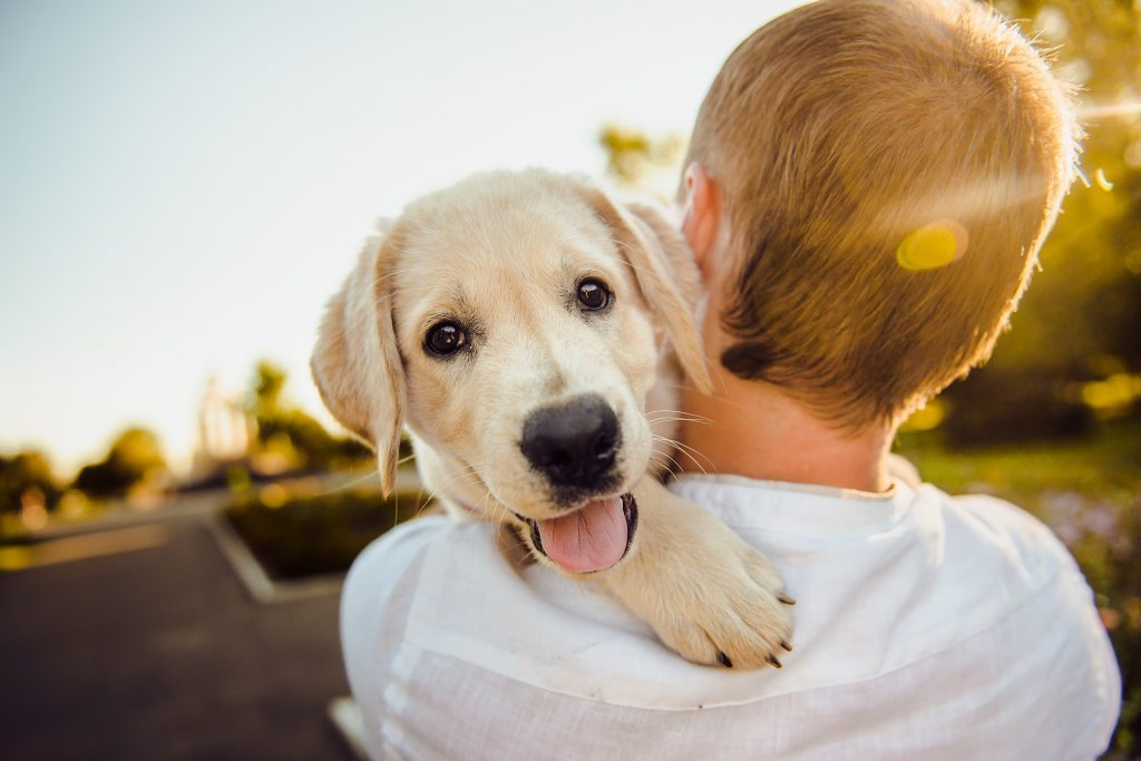 a child holding a puppy-How to Train a Puppy to Walk on a Leash