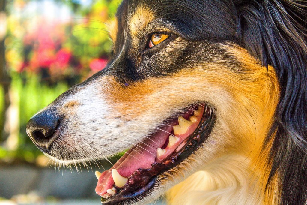 Puppy Teething Timeline: When Do Dogs Lose Their Baby Teeth? |