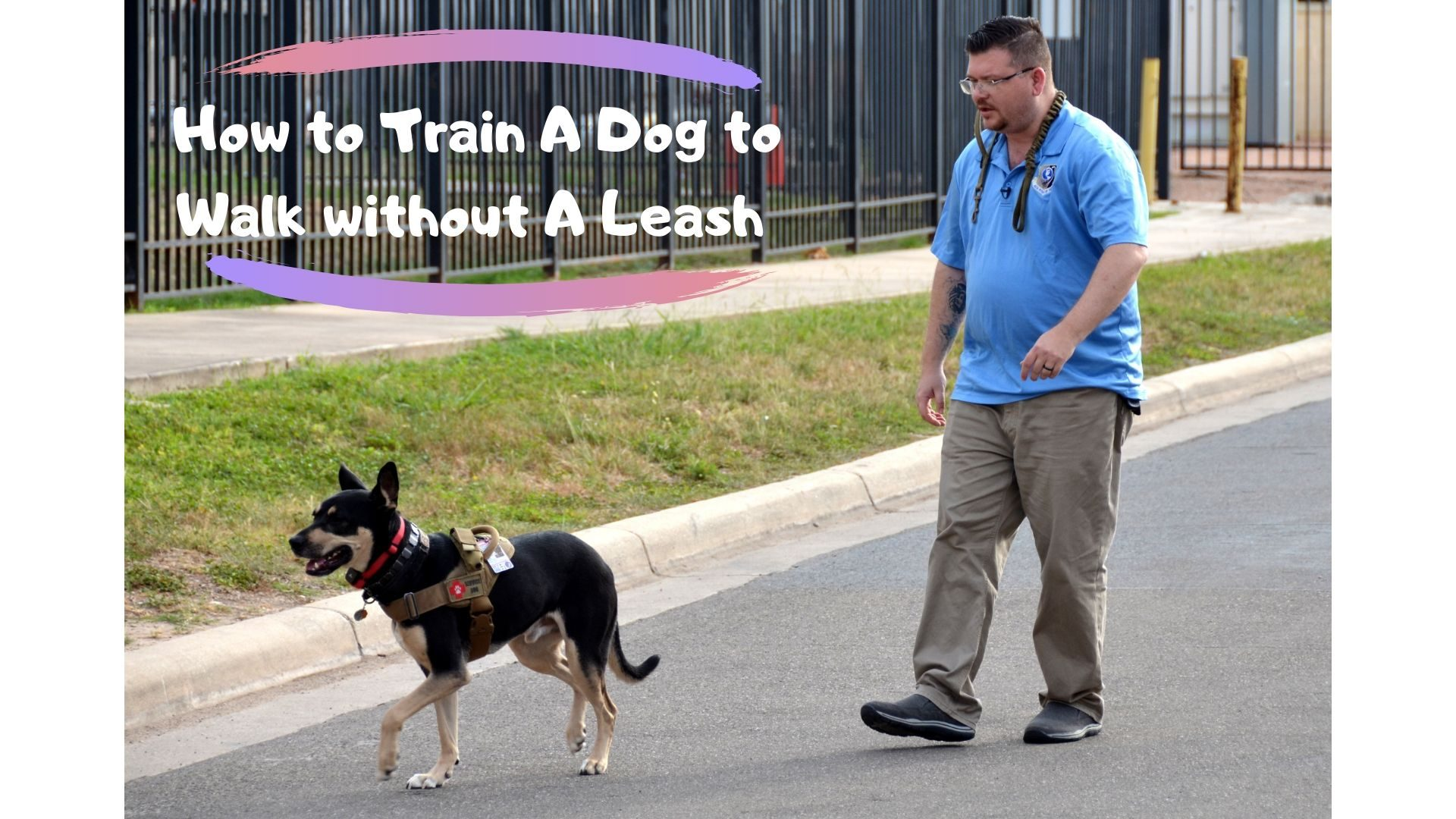 How to Train A Dog to Walk without A Leash (Top 5 Tips) |