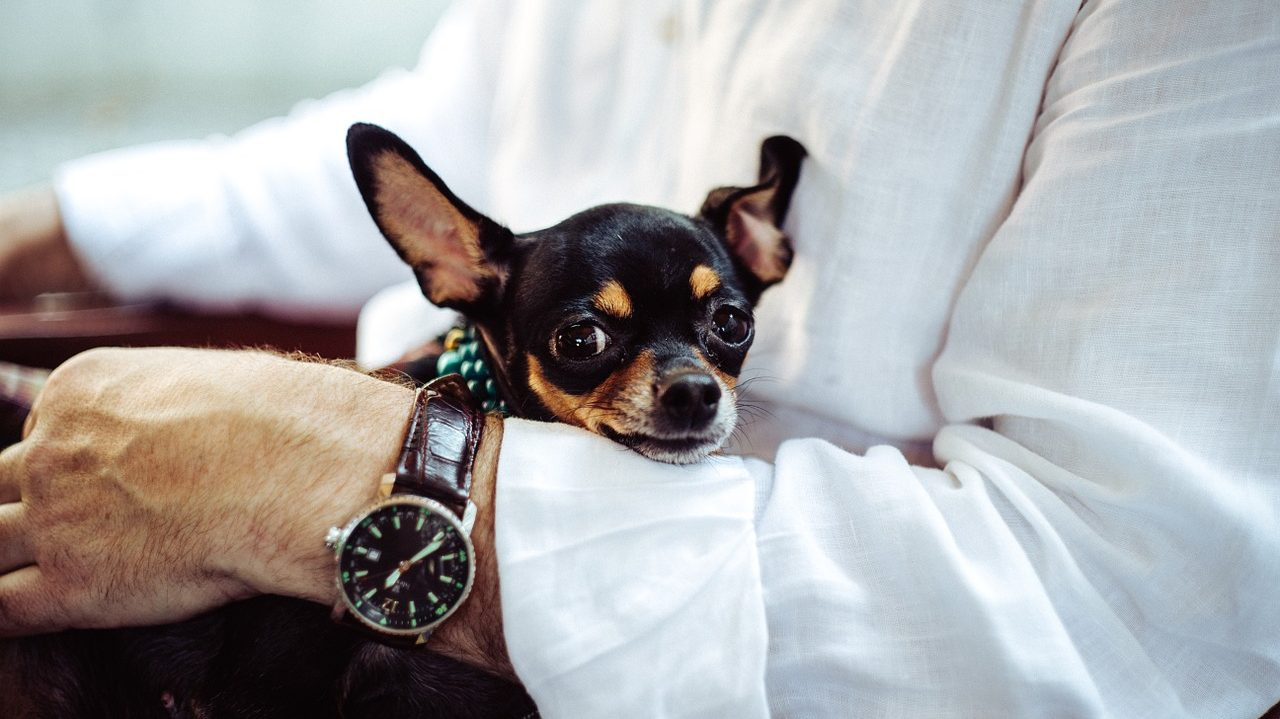 8 Things You Need to Know About Air Travel with Dogs.  