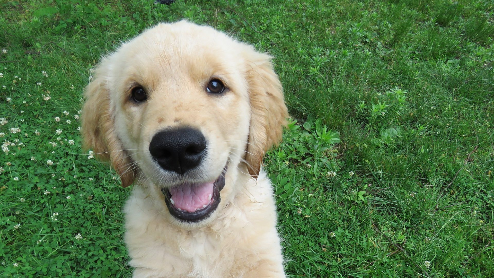 Why You Should Get Puppy Training Pads  