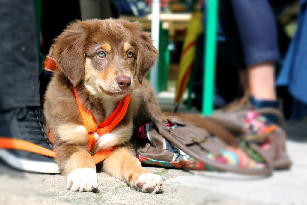 How to Train a Puppy to Walk on a Leash With No Pulling  
