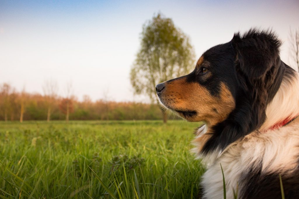 4 Basic Tips to Do Positive Reinforcement Dog Training Right |