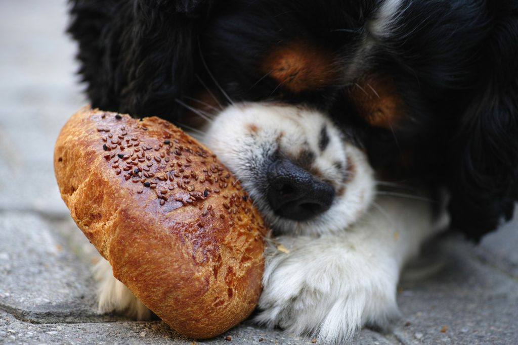 13 Human Foods Safe for Dogs (With Recipes!)  